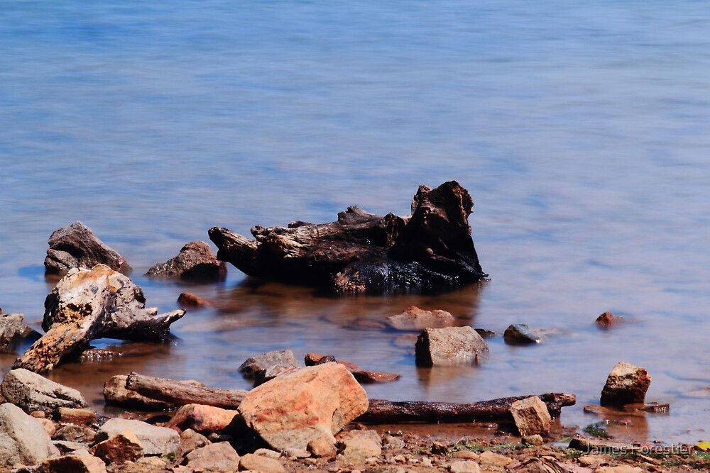 Driftwood by James Forestier