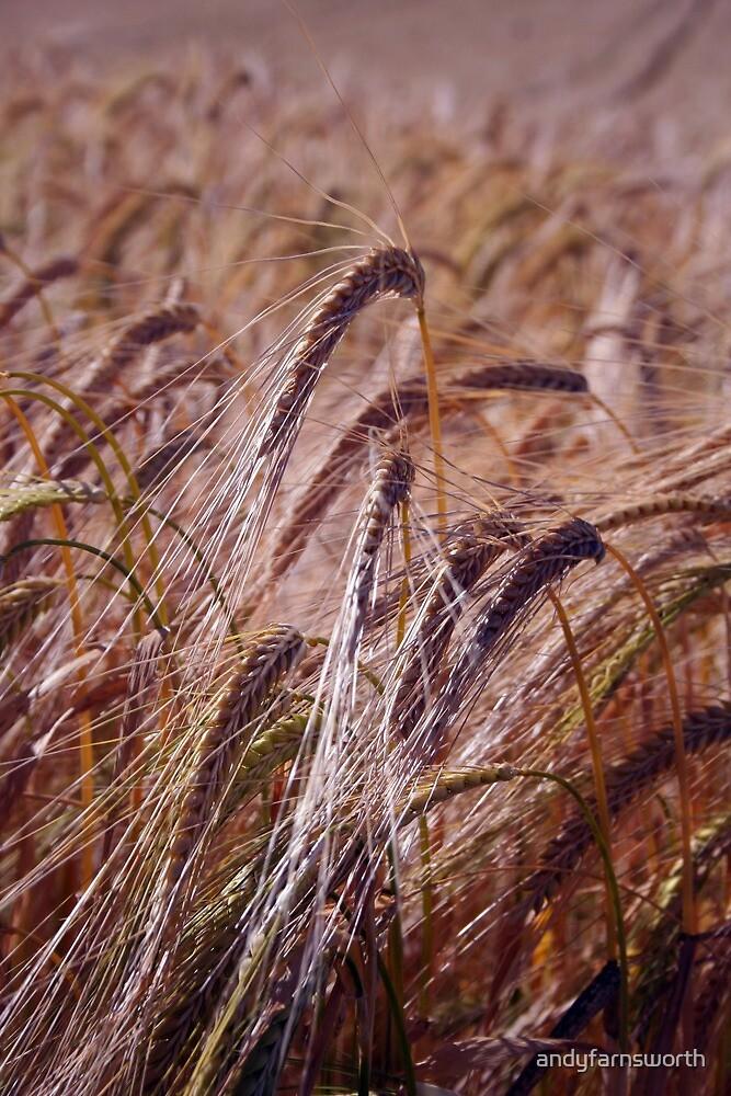 grain by andyfarnsworth