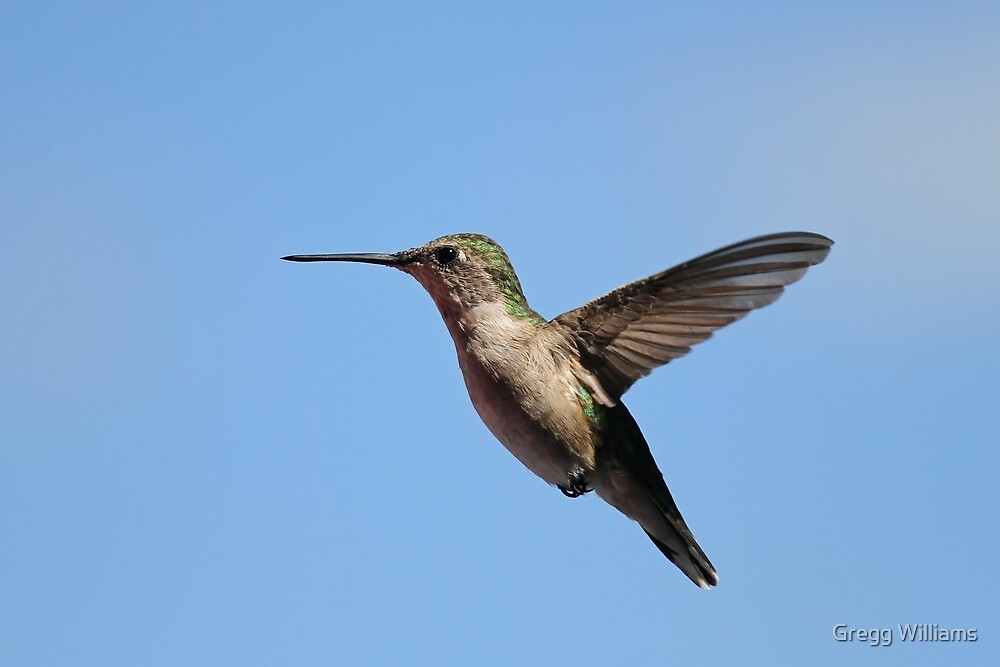 Hummer and blue sky by Gregg Williams