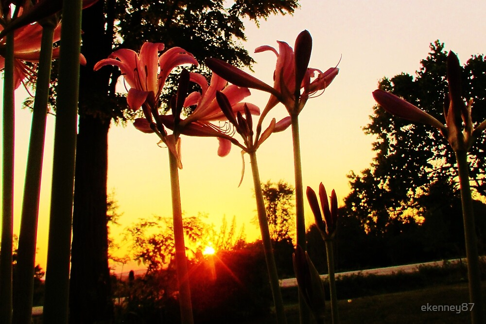 Flowers at Sunset by ekenney87