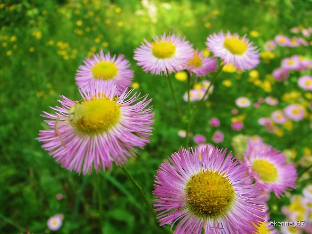 Wildflowers by ekenney87