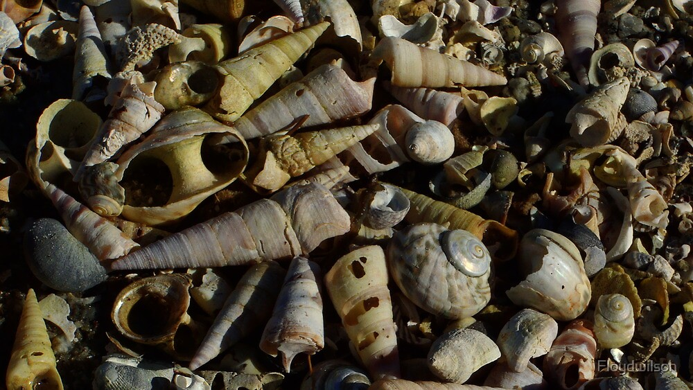 Shell boneyard.  by Floydwilson