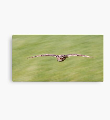 Indian Eagle Owl Inflight Canvas Print