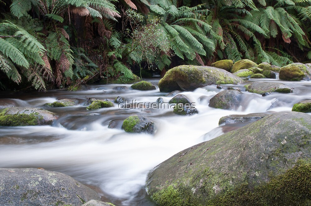 Temperate rainforest by obliqueimages