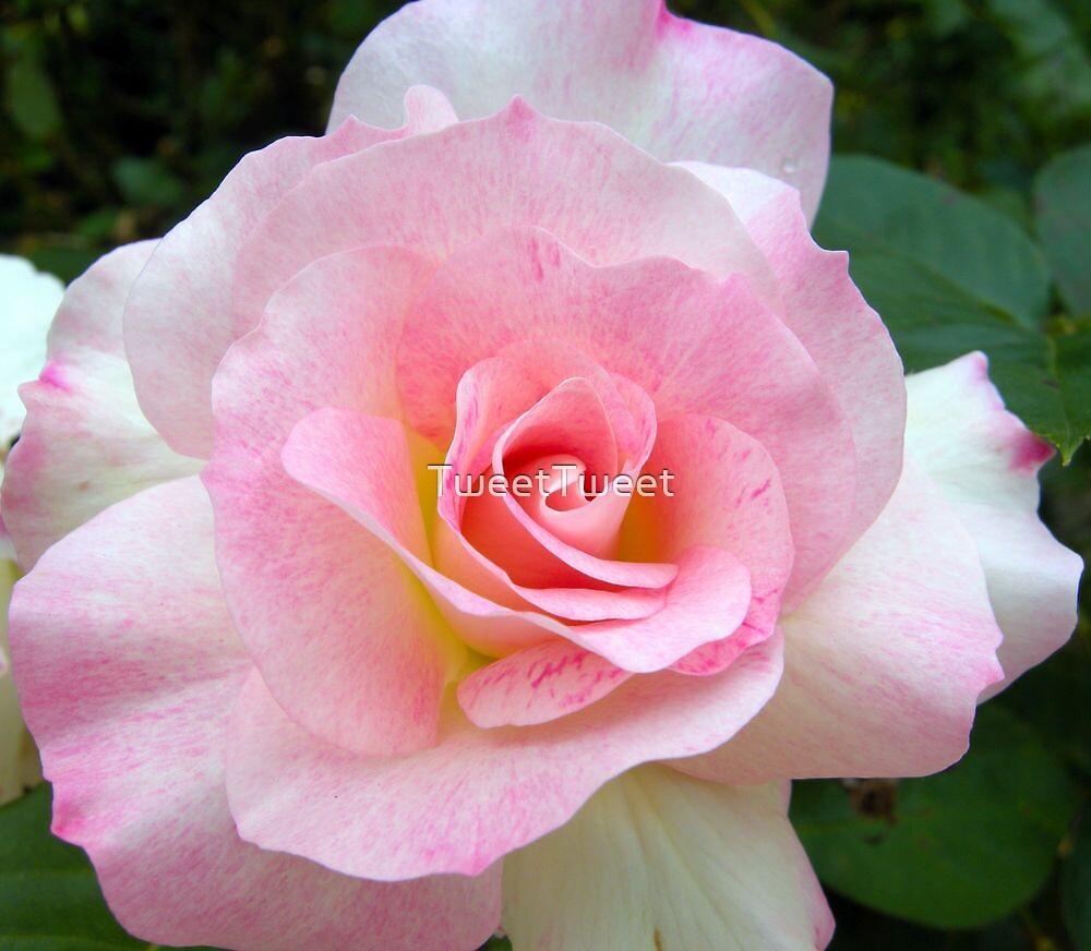 Shades of Pink by TweetTweet