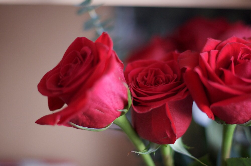 Red Roses by SweetMMS