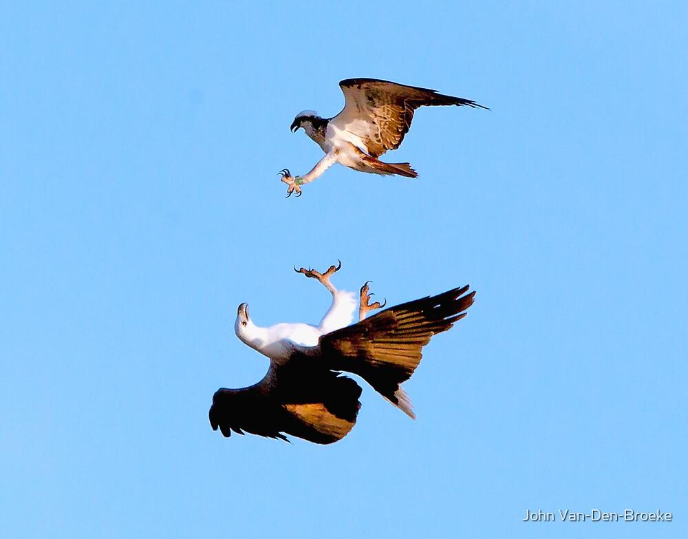 Sea Eagle 72 by John Van-Den-Broeke