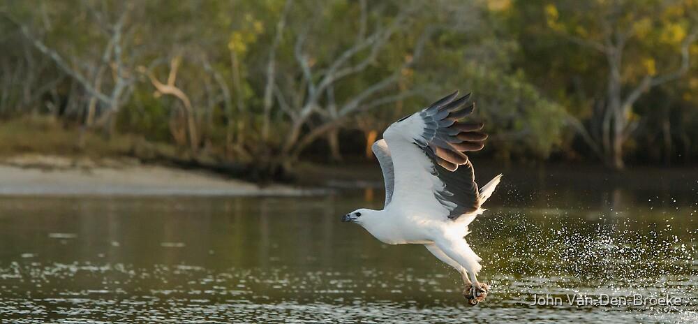 Sea  Eagle  75 by John Van-Den-Broeke