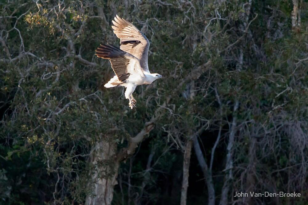 Sea Eagle 76 by John Van-Den-Broeke