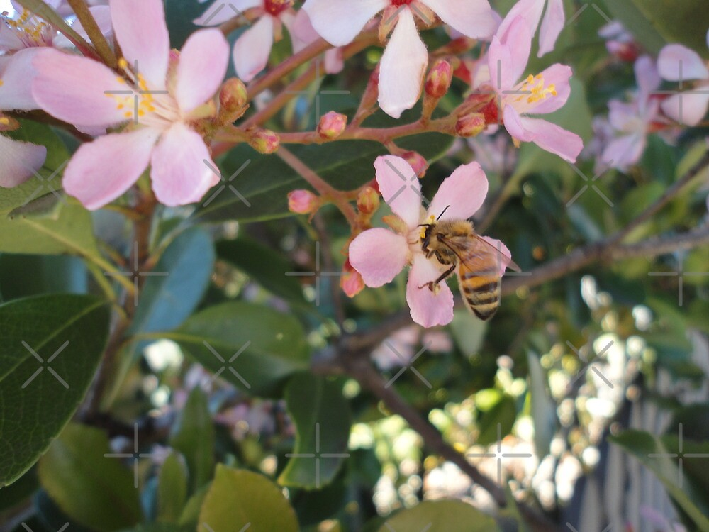 Busy Bee on a Warm Spring Day! by Kymbo