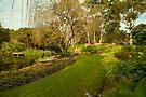 A Garden in Denmark, Western Australia by Elaine Teague