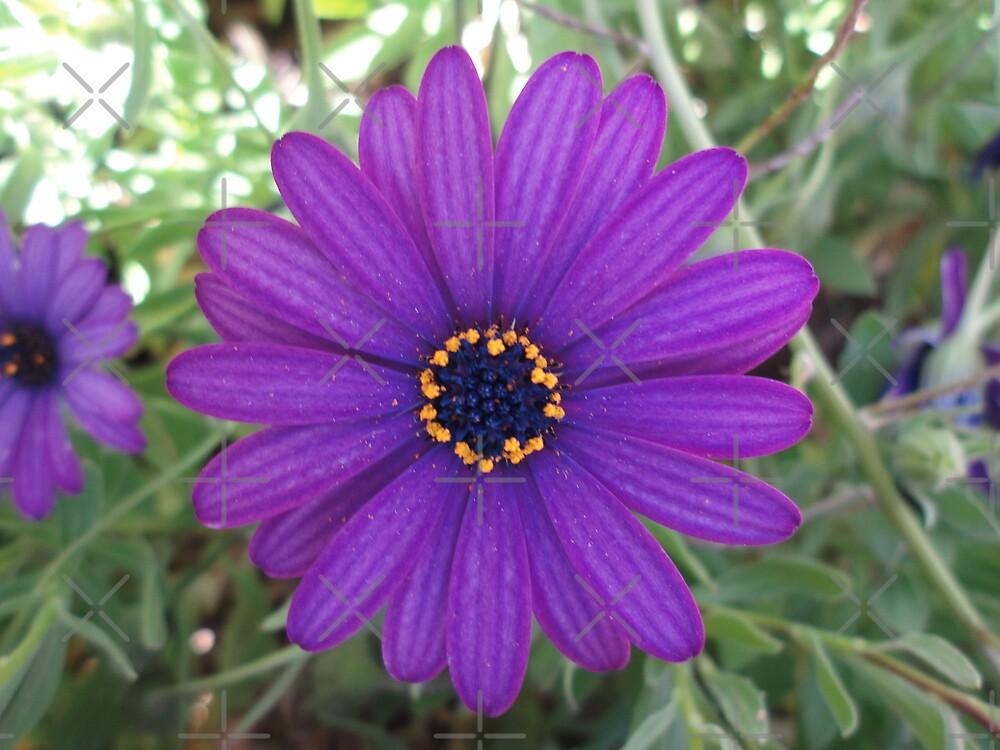 Purple! by Kymbo