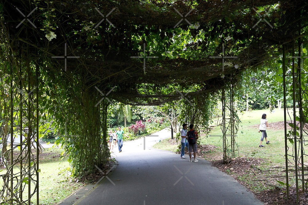 Covered part of path inside the Singapore Botanic Garden by ashishagarwal74