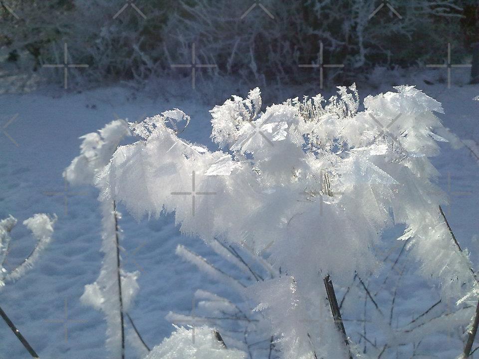 frosty morning 2 by Trevor  Herbert