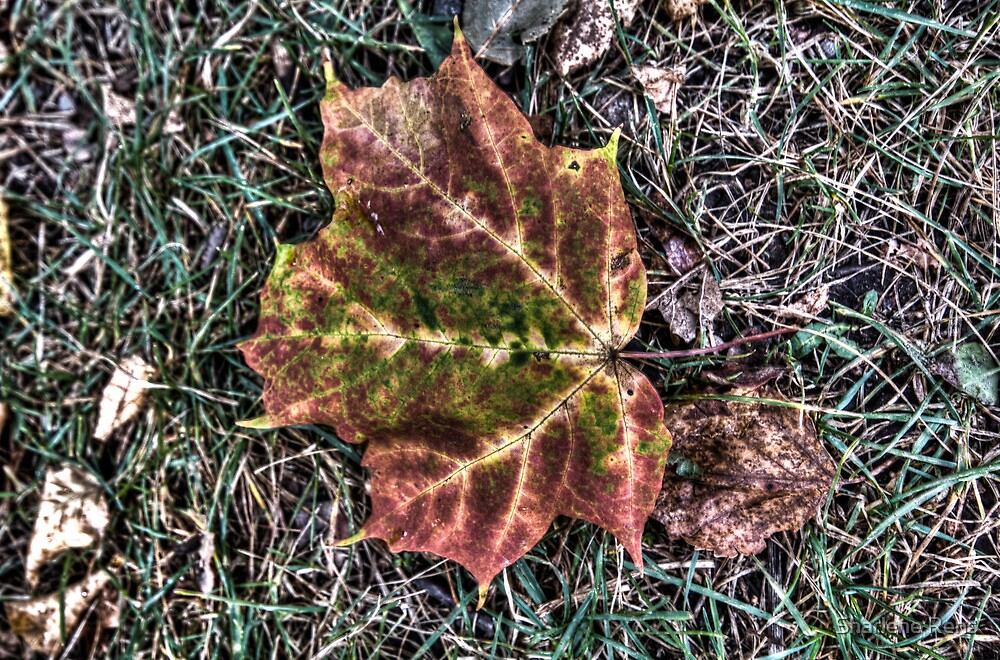 HDR Leaf by Sharlene Rens