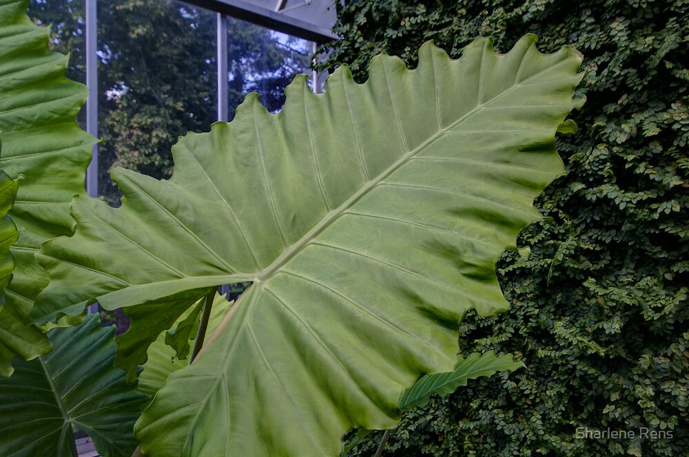 Leafy by Sharlene Rens