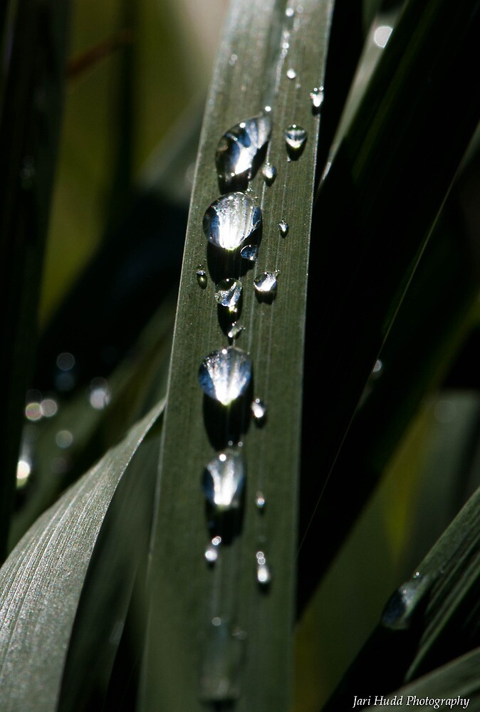 droplets by Jari Hudd