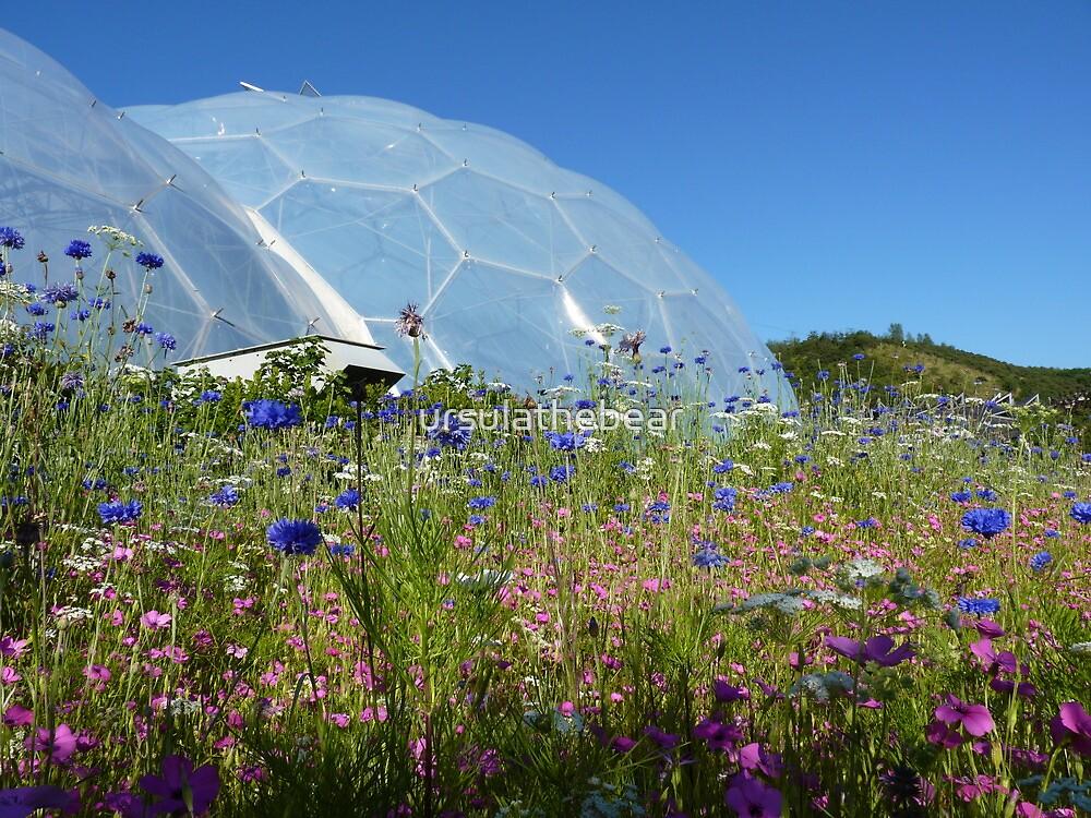Eden Wild Flowers by ursulathebear
