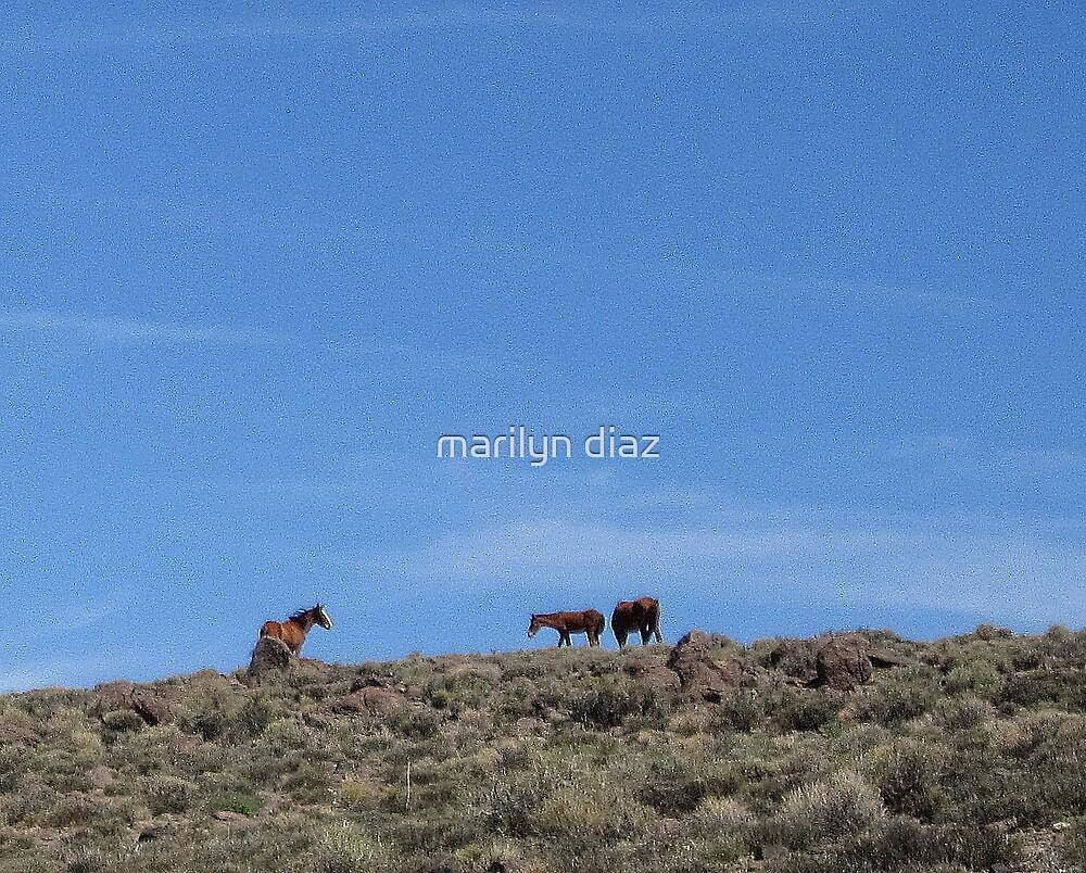 On A Hill by marilyn diaz