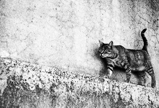 Walking on the wall by Laura Melis