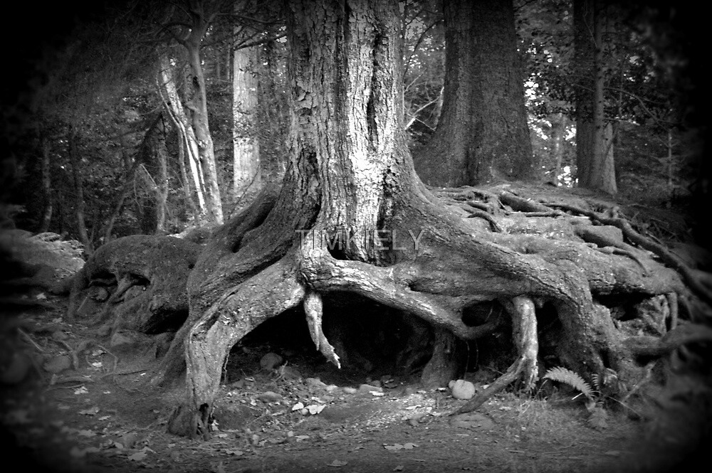 a trees roots  by TIMKIELY