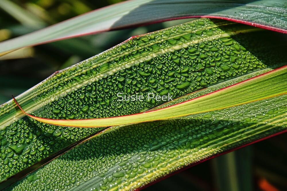 Patterns In Nature by Susie Peek