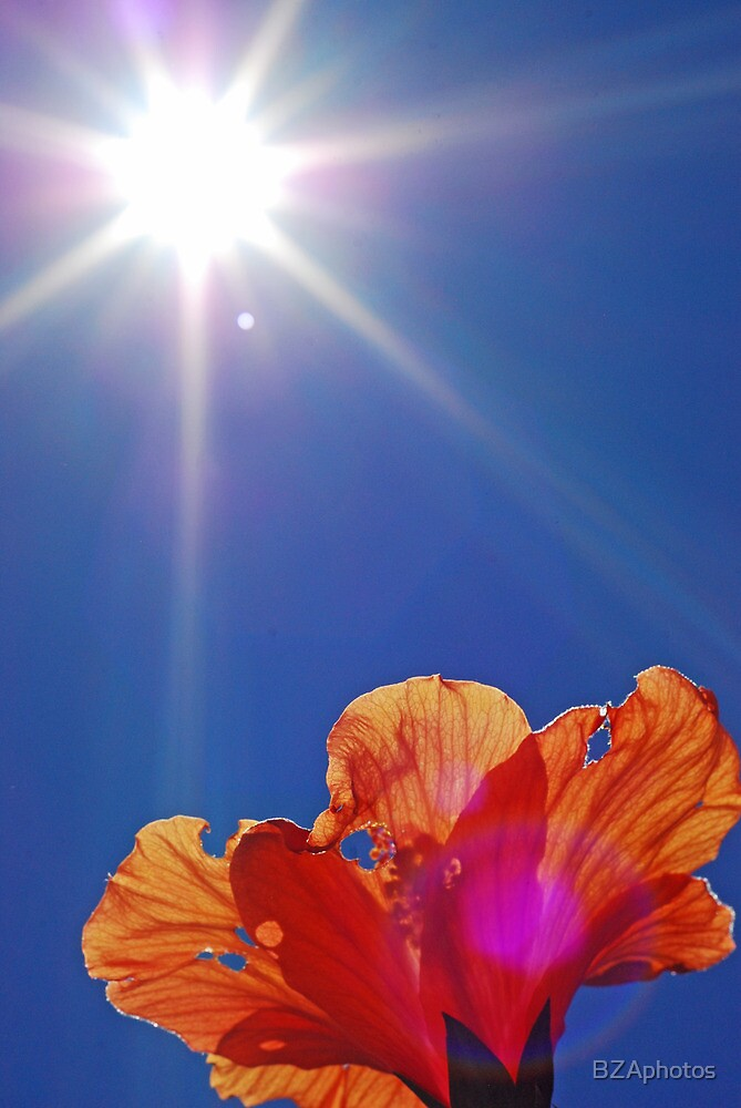 hibiscus sun flare by BZAphotos