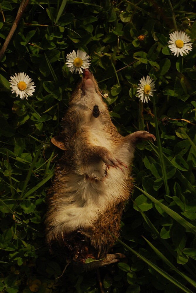 smellin the daisies with fly by twistwashere