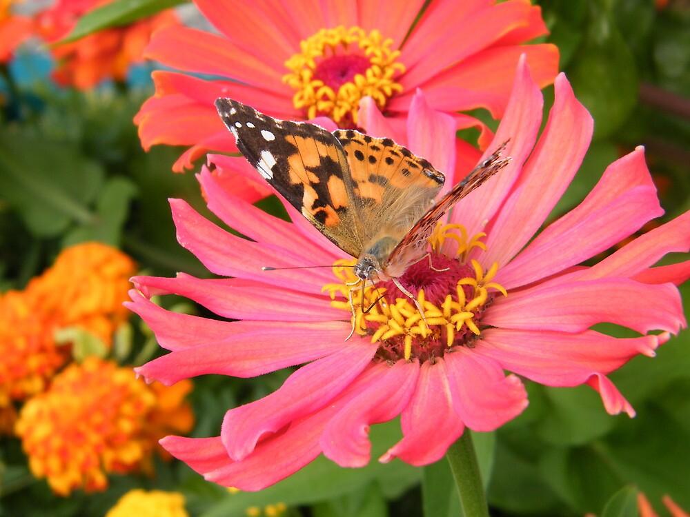 Butterfly And Flower Close Up, New York Botanical Garden, Bronx, New York