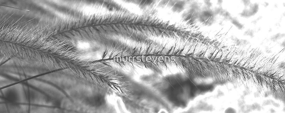 Grass by murrstevens