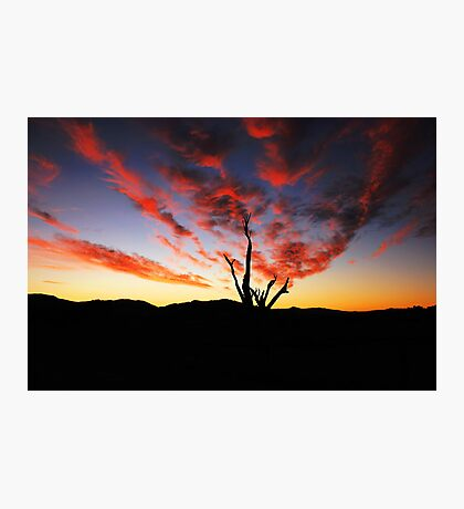 Spring Sunset  Photographic Print