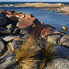 Coastal Detail by Anthony Davey