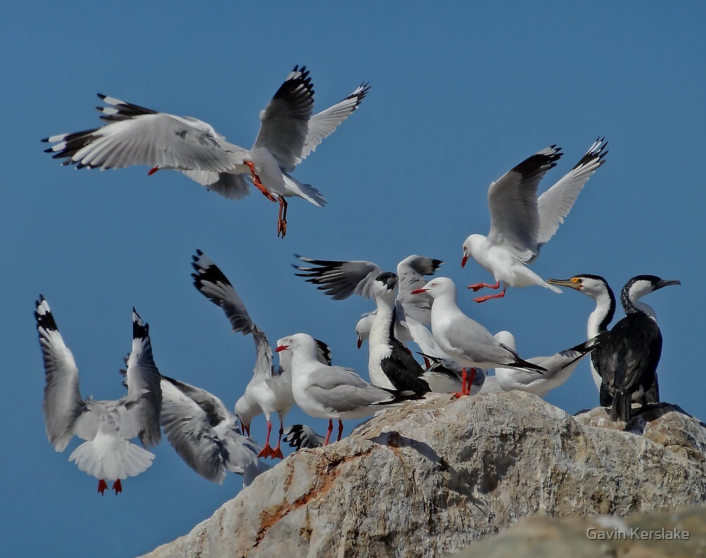 The Birds! by Gavin Kerslake