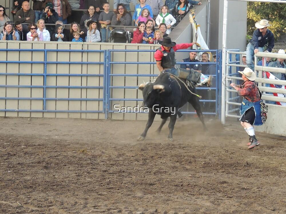 Bull Riding Monterey County Fair Rodeo 1 by Sandra Gray