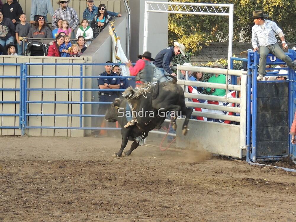 Bull Riding Monterey County Fair Rodeo 2 by Sandra Gray