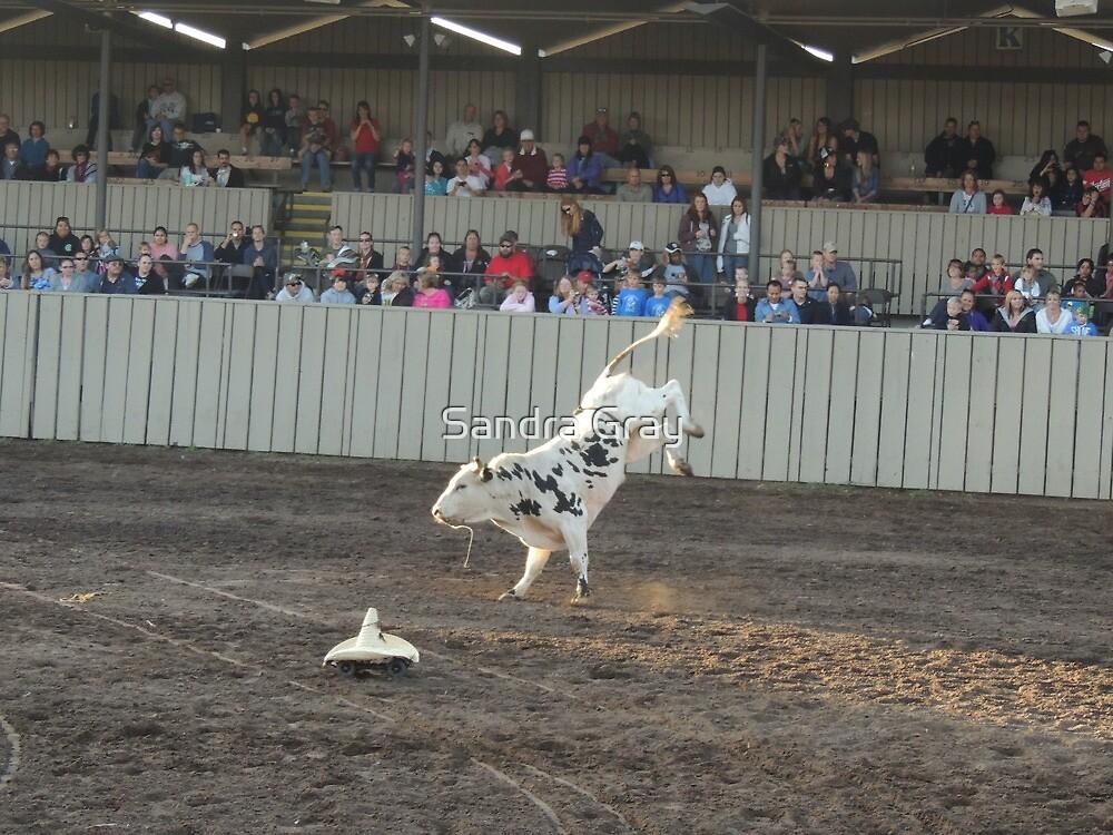 Bull High Jinks Monterey County Fair Rodeo by Sandra Gray