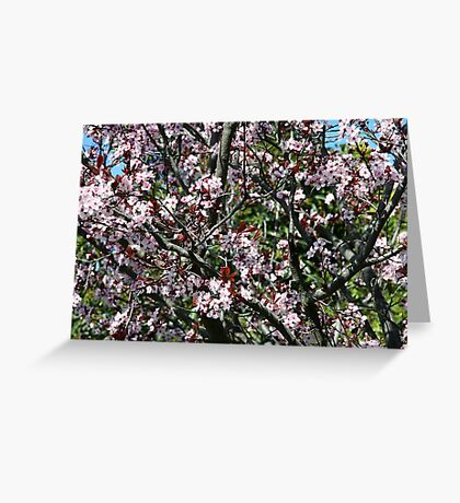 Ume Japanese Apricot Greeting Card
