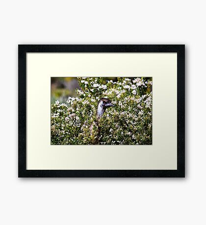 They look nice, they smell nice and they taste nice. Framed Print