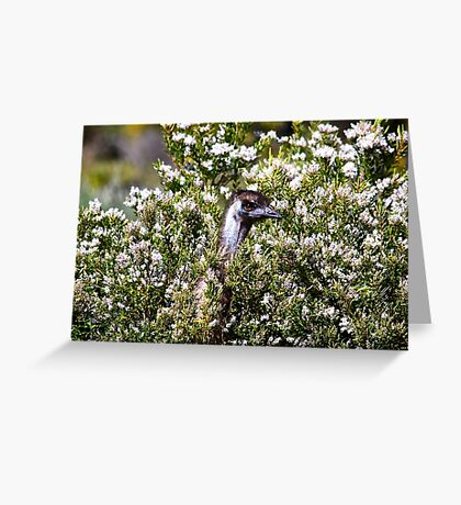 They look nice, they smell nice and they taste nice. Greeting Card