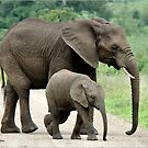 SIDE BY SIDE - THE AFRICAN ELEPHANT – Loxodonta Africana - Afrika Olifant by Magriet Meintjes