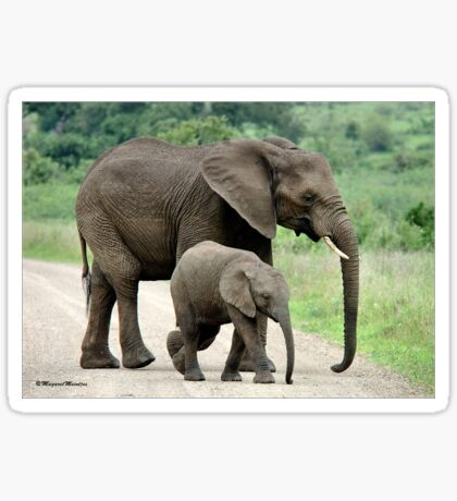 SIDE BY SIDE - THE AFRICAN ELEPHANT – Loxodonta Africana - Afrika Olifant Sticker
