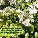 Flowers of the light  Bible text/Bespoke text by Shoshonan