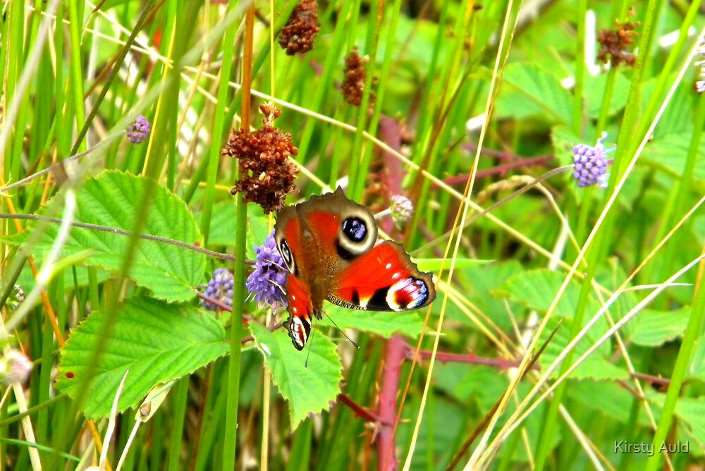 Peacock Butterfly at Loch Shiel by Kirsty Auld
