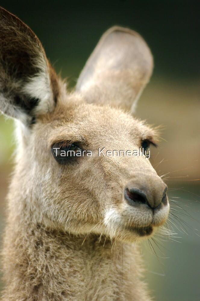 Kangaroo I by Tamara  Kenneally