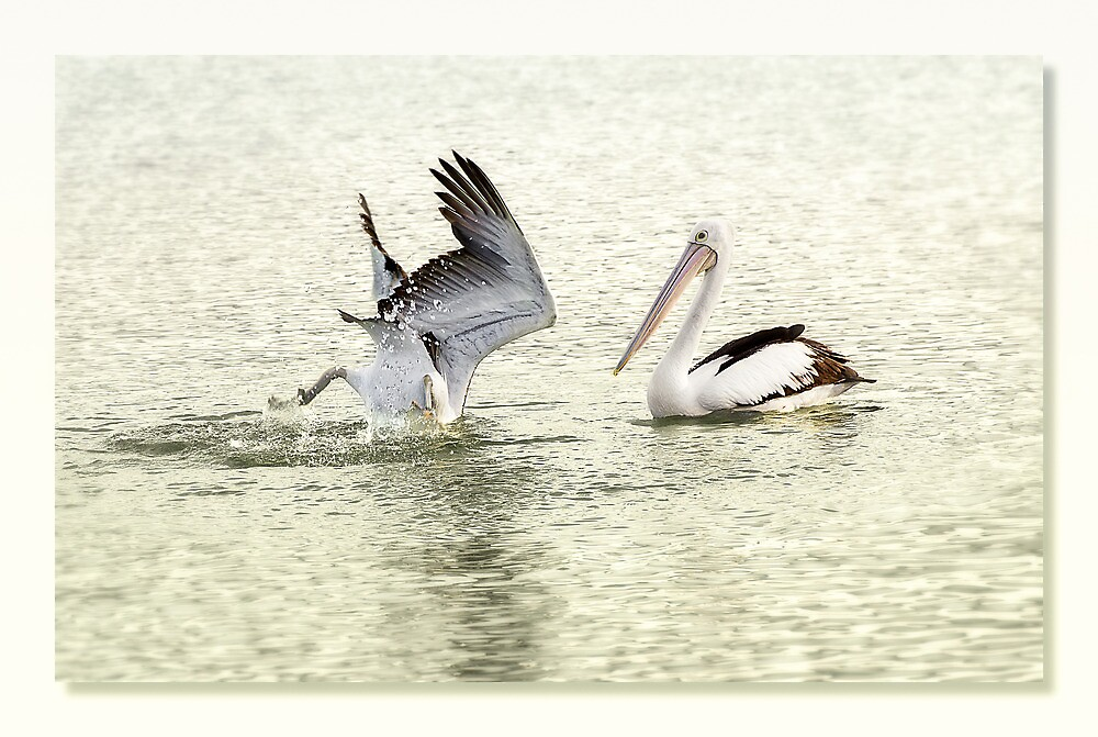 Pelican Dive 01 by kevin Chippindall