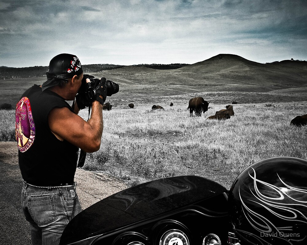 Photographing buffalo South Dakota by David Owens