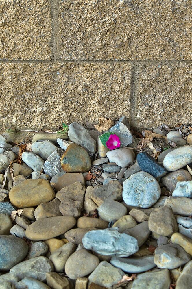 Among the Rocks by Joy  Rector