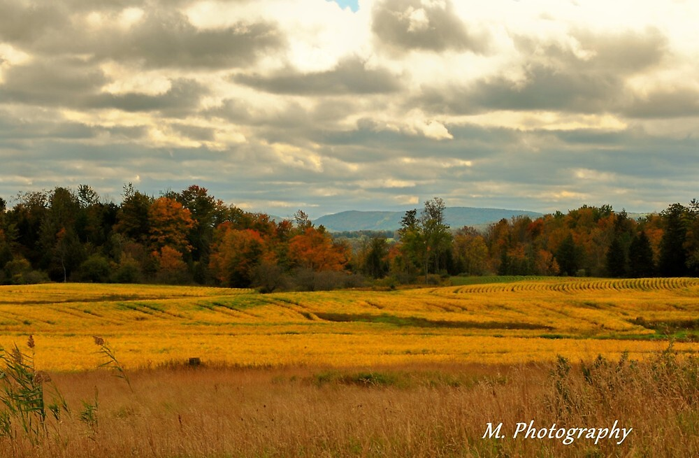 Yellow Fields by M.  Photography
