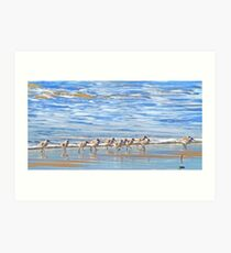 We're following the leader... Sandpipers in Goleta Beach California Art Print