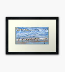 We're following the leader... Sandpipers in Goleta Beach California Framed Print
